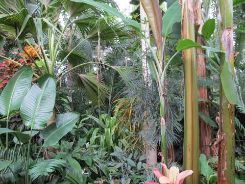 the tropical plants in the botanic gardens dublin